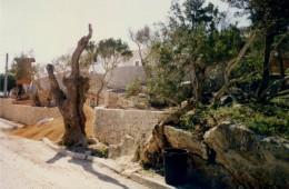 Entrada principal 1994